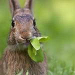 Сколько стоит разведение кроликов в домашних условиях?