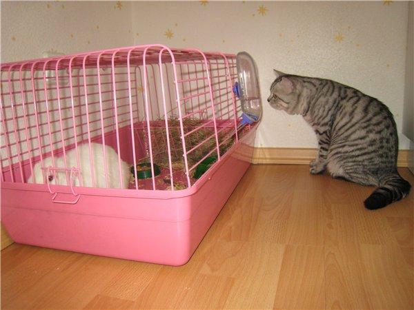 Маленькая клетка для кролика