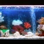 Сколько стоит аквариум?