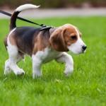 Уход за хвостатым питомцем — как заботиться о собаке?