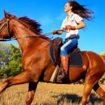 Сколько стоит лошадь?