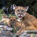 Какие животные обитают в Южной Америке?