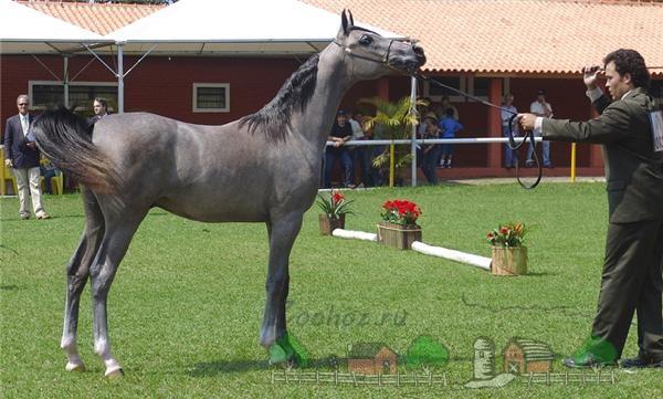 Светло-мышастая масть лошади