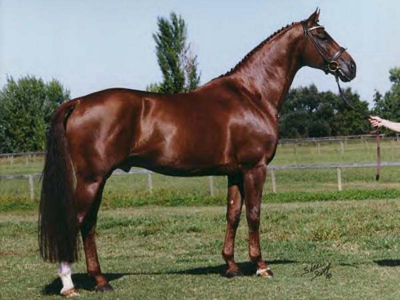 Лошадь каштановой масти