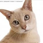 Сколько лет живут коты?