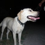 Сколько стоит ошейник от блох для собак?