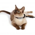 Cat-Leash-Collar