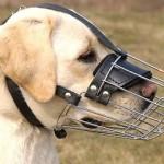 Можно ли выгуливать собаку без намордника?