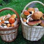 Сколько стоит ведро грибов?