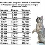 Сколько лет живут кошки?
