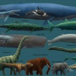 Сколько весит кит?