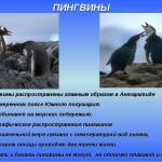Где живут пингвины?