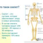 Сколько костей в теле человека?