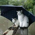 Народные приметы о предсказании погоды