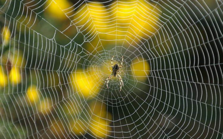 foto-spin-achtergronden-hd-spin-wallpapers-afbeeldingen-29