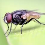Сколько весит муха?