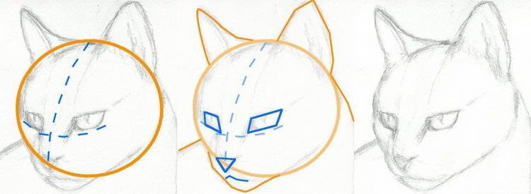 how-to-draw-a-cat-head-draw-a-realistic-cat-step-2_1_000000063157_5