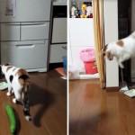 Почему кошки боятся огурцов?