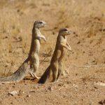 Какие животные обитают в пустыне?