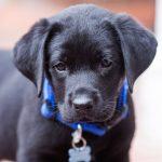 Как назвать собаку мальчика?