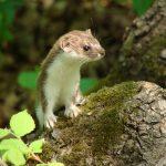 Какие животные обитают в краснодарском крае?