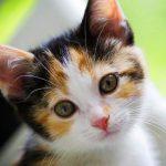 Имя котенка для девочек