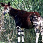Какие животные обитают в Африке?