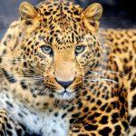 Где обитает ягуар?