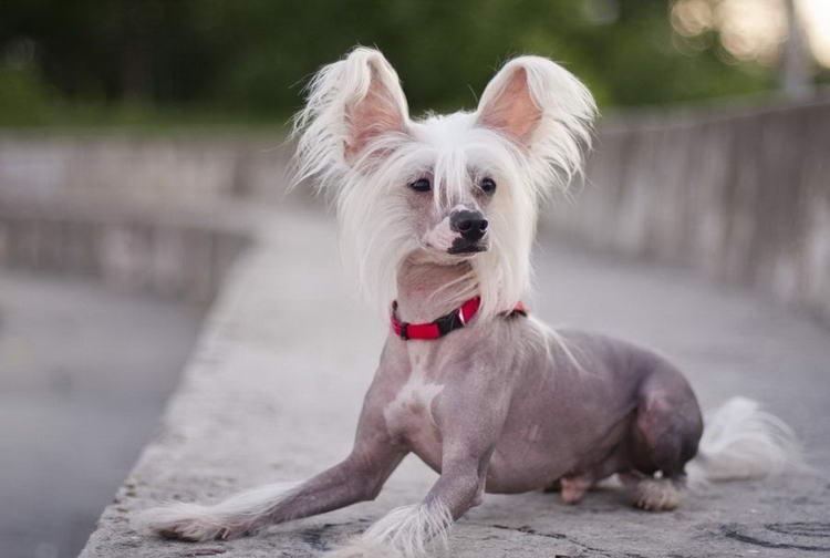 Маленькие породы собак список с фотографиями и описаниями