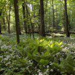 Какие деревья растут в смешанном лесу?
