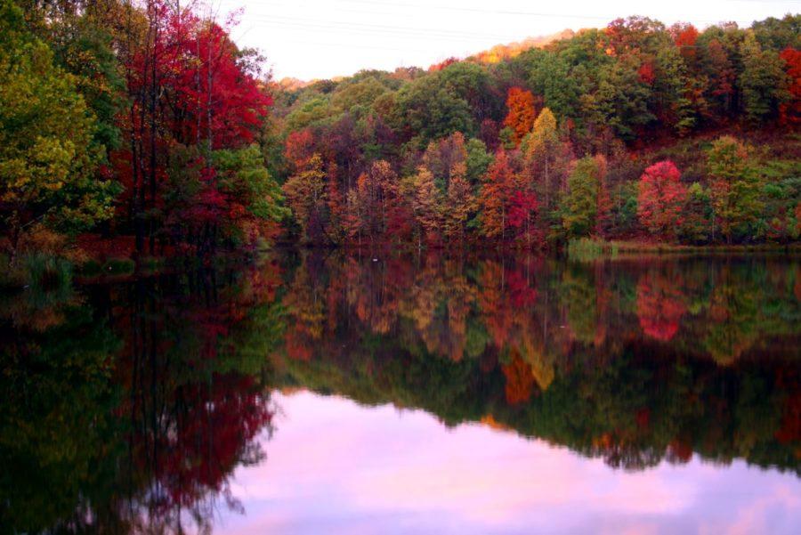 Хвойно-широколиственный лес