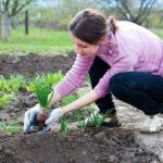 Как защитить руки во время огородных работ?
