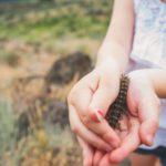 13 жалящих гусениц