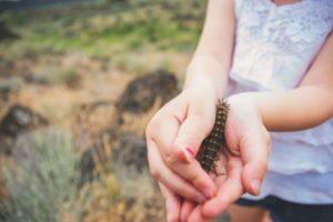 Знаете ли вы, что у некоторых гусениц есть жало? Научитесь распознавать гусениц, которые требуют осторожного обращения.