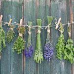 Лечебные травы на своей грядке (+ видео)