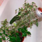 Уход за комнатными растениями (+ фото, видео)