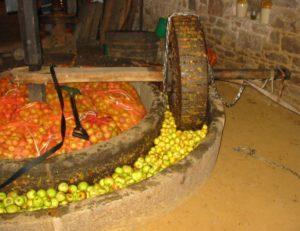 Изготовление сидра в промышленных масштабах