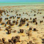 Шарк-Бэй: объект Всемирного наследия ЮНЕСКО в Австралии