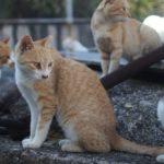 Остров кошек Тасиро – Уникальные места по всему миру