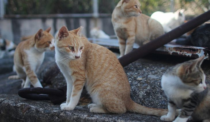 Любители котов со всего мира съезжаются на остров кошек, чтобы посмотреть на кошек в действии.