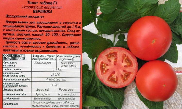 оптимальные условия для выращивания томатов приспосабливаются покупают
