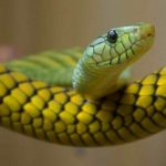 Почему нельзя убивать змей?