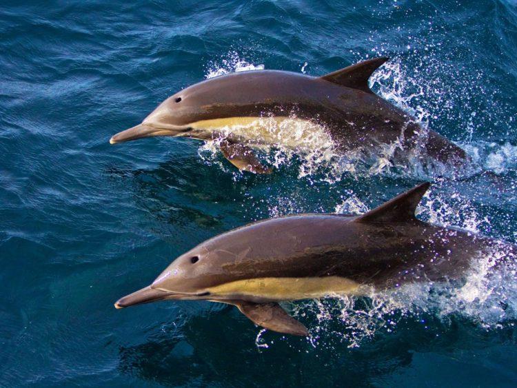 Различают ли цвета дельфины
