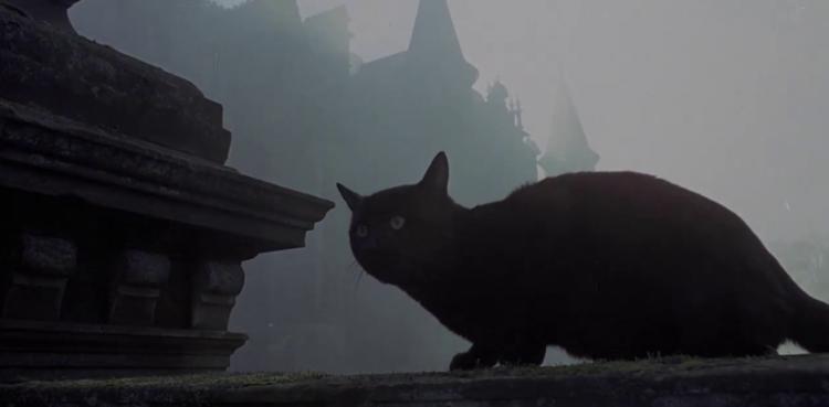 Кладбище кошек